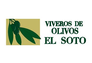 Viveros de Olivos El Soto